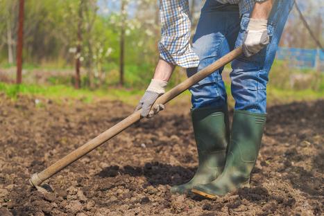 Si l'on remplaçait l'agriculture industrielle par de petites fermes agro-écologiques locales ? | Les colocs du jardin | Scoop.it