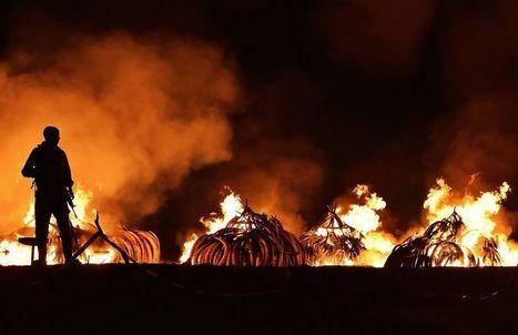 Au Kenya, dans les coulisses du «Davos des éléphants» | Biodiversité | Scoop.it