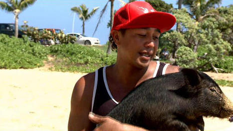 Surfing pig catches waves, turns heads in Hawaii | Just riding & Having fun ! | Scoop.it