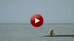 Powerful New TV Ads Focus on Plight of Polar Bears in Warming World - Center for Biological Diversity (press release) | Polar Bears and Global Warming | Scoop.it