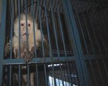 Stop the keeping of primates... - The Petition Site | Save Animals Today | Scoop.it