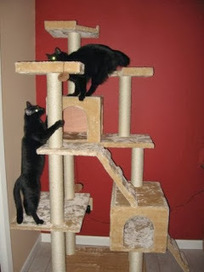 Shelly's Super Spiffy Stuff : Sisal Cat Tree | Pets And Animals | Scoop.it