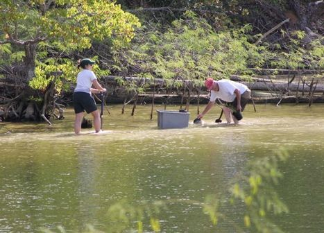 Work underway to grow plants, bring Lake Livingston's fishery back to life - Houston Chronicle (subscription) | Fish Habitat | Scoop.it