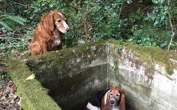 Old Dog Watches Over Trapped Buddy for a Week Until Help Arrives | Care2 Causes | This Gives Me Hope | Scoop.it