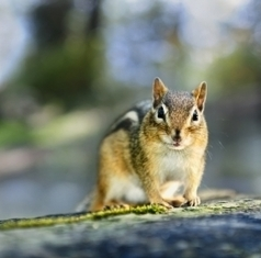 Wildlife and Habitat Conservation News: How can Conservation Efforts help species adapt to climate change? | The Wild Planet | Scoop.it