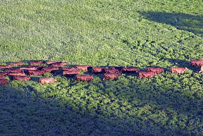 Sector agropecuario, gran responsable del efecto invernadero | Agencia de Noticias UN | Agua | Scoop.it