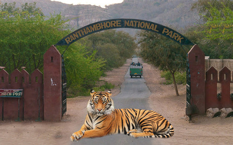 Ranthambore National Park can brief you on the wildlife | ARV Holidays Pvt. Ltd. | Scoop.it