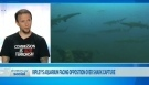 CTV News Channel: Shark capture opposition | Life on Earth | Scoop.it