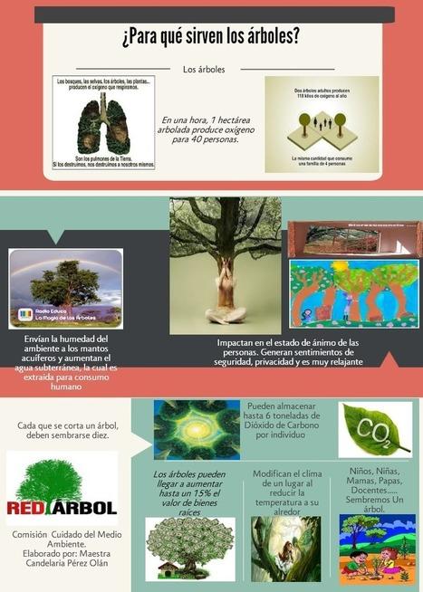 """Para qué sirven los árboles?3 Copy   Portafolio """"Modelos didácticos basados en las TIC""""   Scoop.it"""