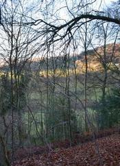 """TRUST LAUNCHES APPEAL TO CREATE """"LAURIE LEE WOOD"""" 
