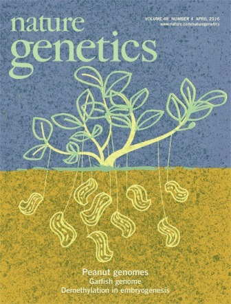 The genome sequences of Arachis duranensis and Arachis ipaensis, the diploid ancestors of cultivated peanut | MycorWeb Plant-Microbe Interactions | Scoop.it