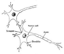 Psychotherapy may fix serotonin receptors better than antidepressant drugs   PsyPost   Brain & Learning   Scoop.it
