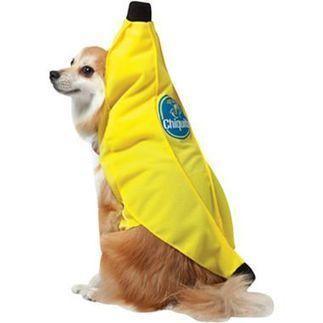 Banana Dog Costumes   Pet Care News   Scoop.it