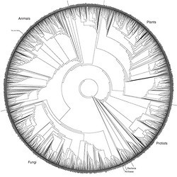 The Tree of Life. ~3,000 species, based on rRNA...   DigitAG& journal   Scoop.it