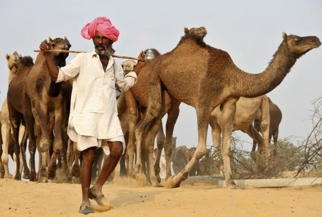 A quarter of India's land is turning into desert - minister   Sustain Our Earth   Scoop.it