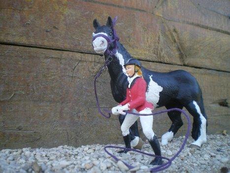 Début en éthologie avec Indienne - Centre equestre /Ranch d'El Paso | éthologie équine | Scoop.it