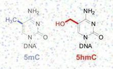 New technique reveals unseen information in DNA code   Amazing Science   Scoop.it