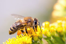 Ban Neonicotinoid Pesticides - Our Pollinators Are Dying | Biodiversity IS Life  – #Conservation #Ecosystems #Wildlife #Rivers #Forests #Environment | Scoop.it