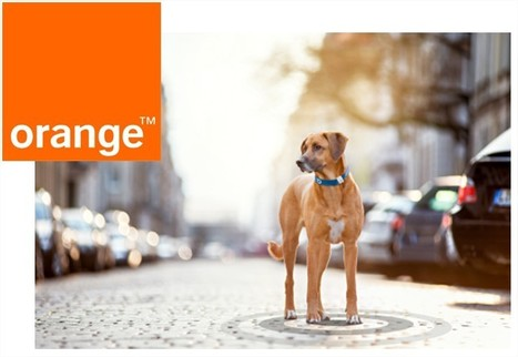 Orange to bring IoT to pets -  - ITP.net | Quantified Pet | Scoop.it