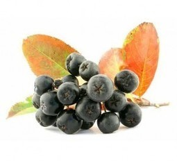 Aronia – Super Food And Natural Medicine – Health and Beauty Makeup   Shrewd Foods   Scoop.it