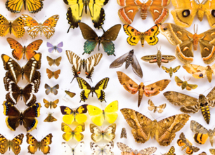 What Insects Can Tell Us About Climate Change | Making the World a Better Place | Scoop.it