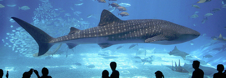 Top 10 des plus grands aquariums du monde | Actu Tourisme | Scoop.it