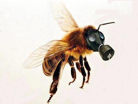 PESTICIDES - L'Anses accusée de manquer de transparence - Enviro2B | Abeilles, intoxications et informations | Scoop.it