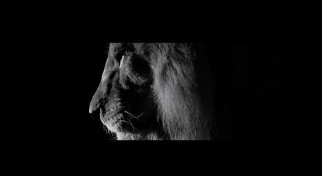 Le Lion, le nouvel épisode de la saga «Inside Chanel» | Luxury | Scoop.it