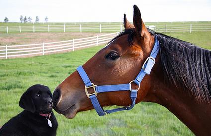 I Am a Horse.  My Son Is a Dog | Raising Bilingual Kids | Scoop.it
