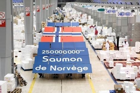 Le saumon norvégien déclaré mauvais pour la santé | Challenge | CAP21 | Scoop.it