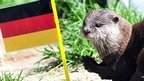 Germany's 'psychic' pets concern animal rights group - BBC News | Animal Rights | Scoop.it