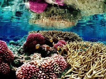 Ocean acidification is kryptonite to all coral reefs... except one in the Western Pacific | In Deep Water | Scoop.it