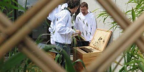 À l'hôpital Robert-Debré, les abeilles peuvent aussi soigner | apiculture31 | Scoop.it