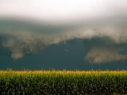 Hungary Destroys All Monsanto GMO Corn Fields « Earth First ... | GMOs | Scoop.it