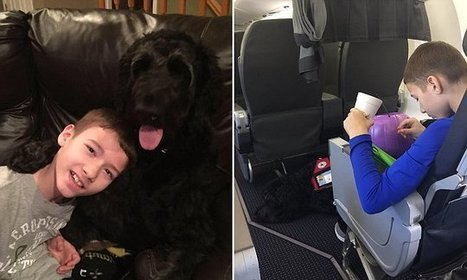 American Airlines kicks disabled boy off flight home | WACPR | Scoop.it