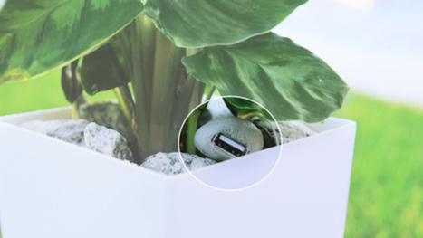 Cette plante verte a le pouvoir de recharger trois batteries de smartphone par jour | LOW TECH Réparer & détourner - nouvelle source d'innovations | Scoop.it