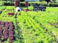 Agriculture : quel rôle pour l'emploi ? | Plateforme et ressources - ALIMENTERRE | Informer utile ! | Scoop.it