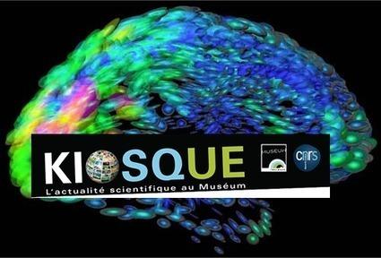 Kiosque - CNRS/Museum - Des souris, des abeilles et des Hommes : recherche sur le cerveau | Actualité des laboratoires du CNRS en Midi-Pyrénées | Scoop.it