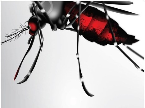 Laos Gripped by Deadly Dengue Fever Surge | Sustain Our Earth | Scoop.it
