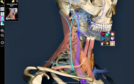 3D Anatomy Learning: app Chrome para conocer la anatomía humana | educación física y deporte | Scoop.it