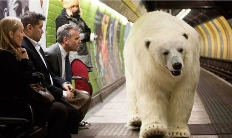Un ours polaire dans la ville | streetmarketing | Scoop.it