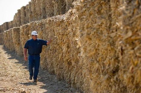 Biomass power: Feedstock cost is the key - Bioenergy Crops   Bioenergy Crops   Scoop.it