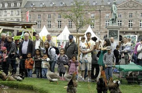 À Strasbourg, « les citadins veulent des produits locaux, plus que du bio » | Agriculture locale | Scoop.it