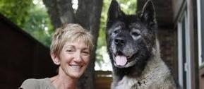 Utah dog training the easy way | Dog training utah | Scoop.it