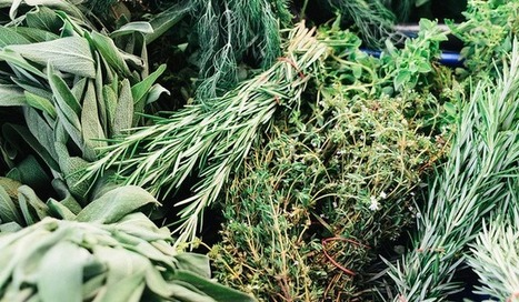 Testing Reveals Weeds And Rice Fillers Where The Herbs Should Be In Herbal ... - The Consumerist   Fitness and Weight loss   Scoop.it