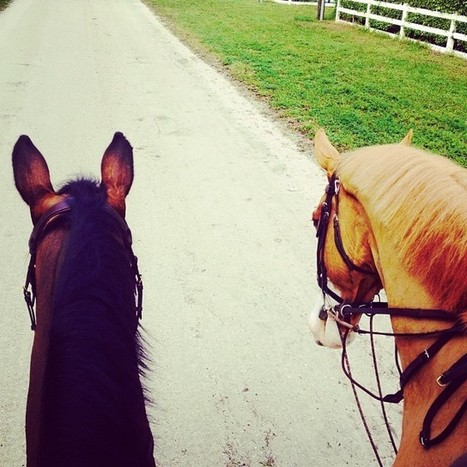 Hunter Myths – Trail Riding | Horse Blog in the Lone Star State | Horse and mule news items | Scoop.it