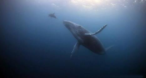 Vidéo Full HD | Baja : les plus belles plongées du monde ? | Plongeurs.TV | Scoop.it