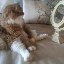 A funny cat see her own body in the mirror | 2 dogs are very happy | Scoop.it