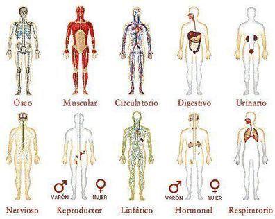 Los Órganos del Cuerpo y su Relación con Las Emociones ... | Vampiros Energeticos | Scoop.it