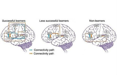 How learning a new language changes your brain - at any age | Biotech and Beyond | Scoop.it
